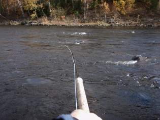 Spey Rod bent by the wind